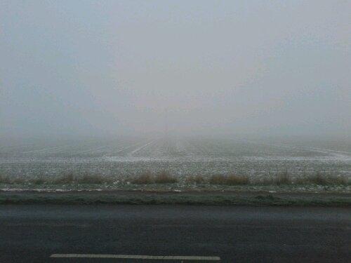 Foggy field!