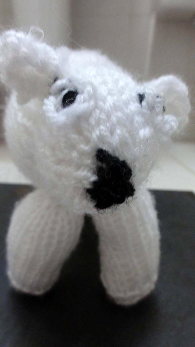 Meet Paul the Polar Bear