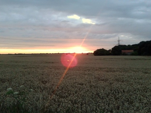 Sunset over the cornfield.
