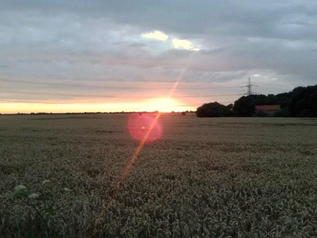 Sunset over the cornfield.