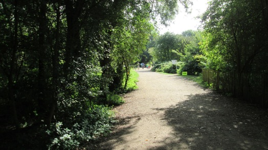 Our local park run takes place in a wooded area with gravel pits.